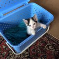 elma smit new kitten finds a name