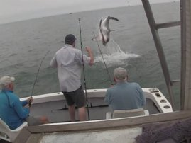 image shark jumps out water fishing