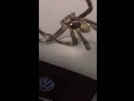 image spider traps woman in car