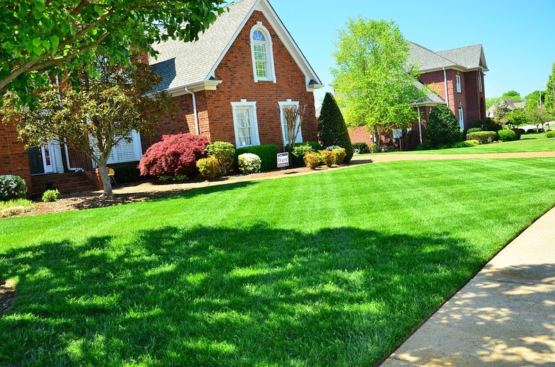 6 Lawn Care Tips For Beginners