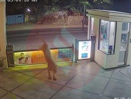 Lion Parking