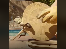 lizard in pool filter