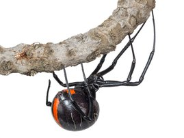 New spider species discovered in South Africa