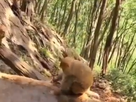 WATCH: A mama monkey is shown giving her baby a bath and it gets us talking about mothers