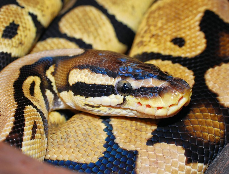 Man who sleeps with his 2 snakes is now looking for LOVE...