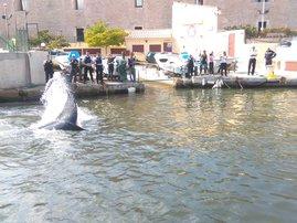 Marseille whale