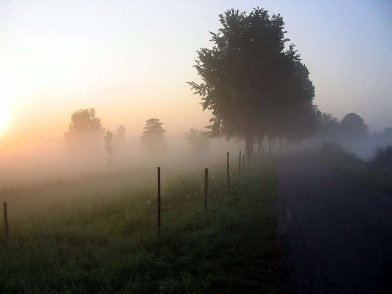 Morninig, fog, weather