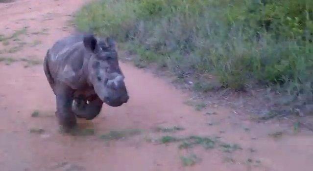ntombi-rhino-frolick.jpg