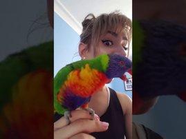 parakeet hissing sound