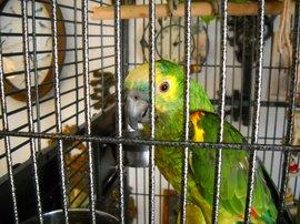 parrot reveals secrets