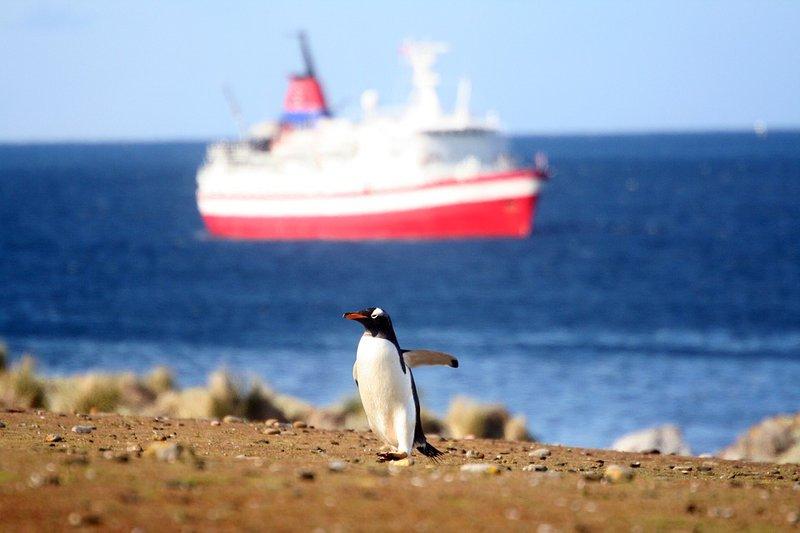 Penguin found in north coast beach
