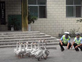police with geese.jpg