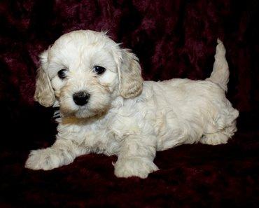puppy dog.jpg