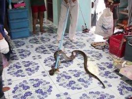 python under sleeping boy's bed