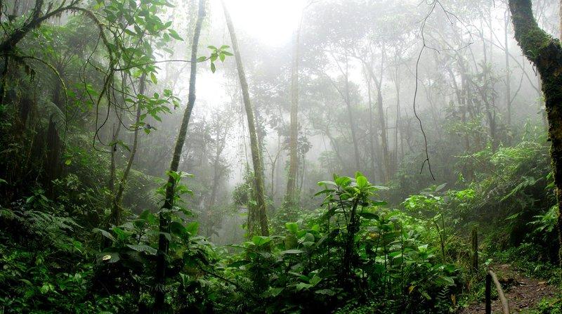amazon rainforest generic