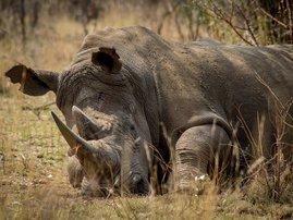 Edna Molewa on Rhino Poaching