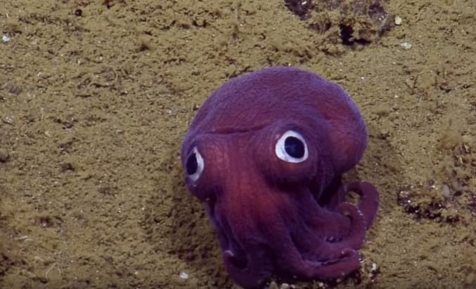 This must be the cutest sea creature ever