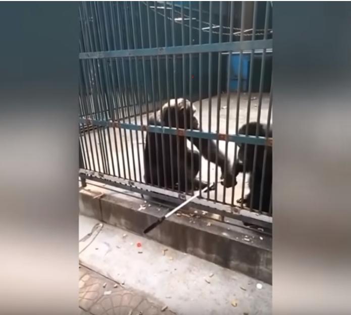 selfie chimp