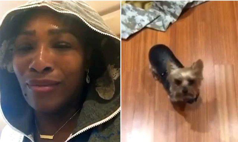 Serena Eats Dog Food