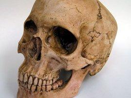 skull_2.jpg