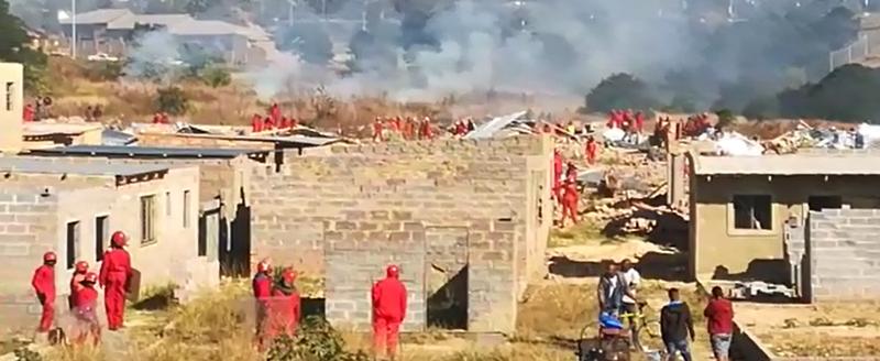 Image result for red ants alex demolition