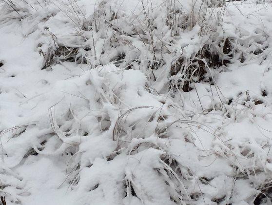 Snow in Dargle, KZN