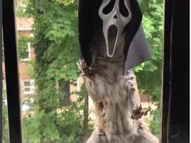 squirrel scream