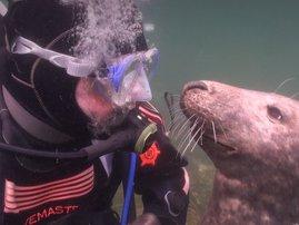 tmg-facebook_social seal image diver