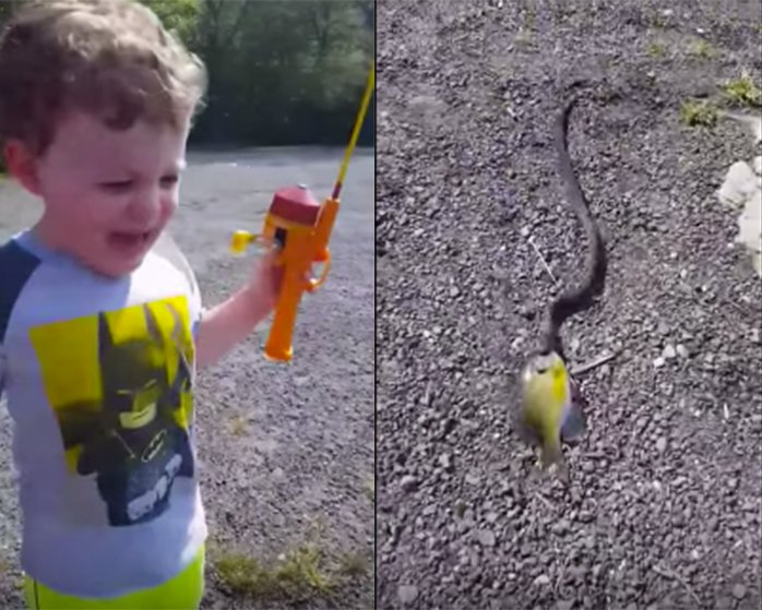 Toddler's catch eaten by snake