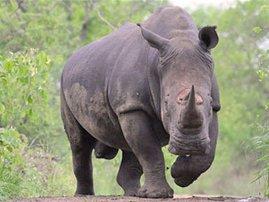 toolkit-to-combat-rhino-poaching-480.jpg