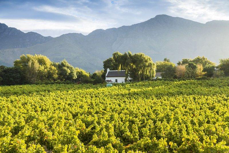 tour SA - cape winelands - mashable