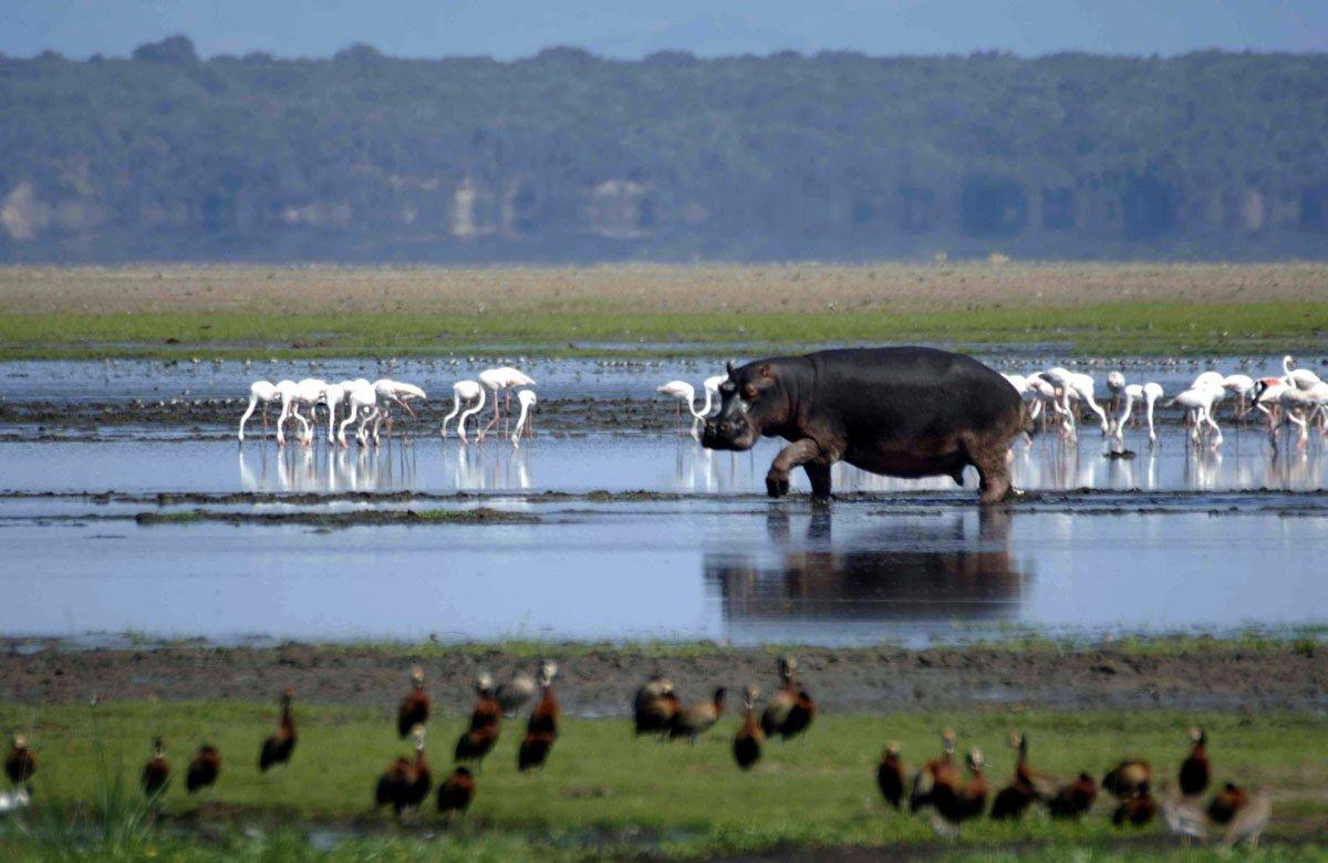 tour SA - isimangaliso wetland park - isimangaliso-dot-com