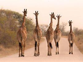 tour SA - kruger national park - mashable