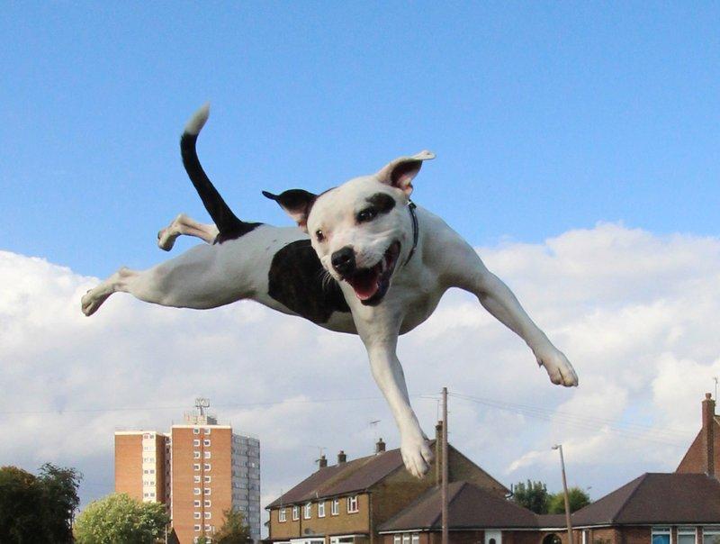 Ziggy Trixx Good Dog